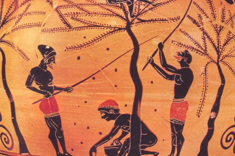 THE CULTURE OF GREEK OLIVE OIL